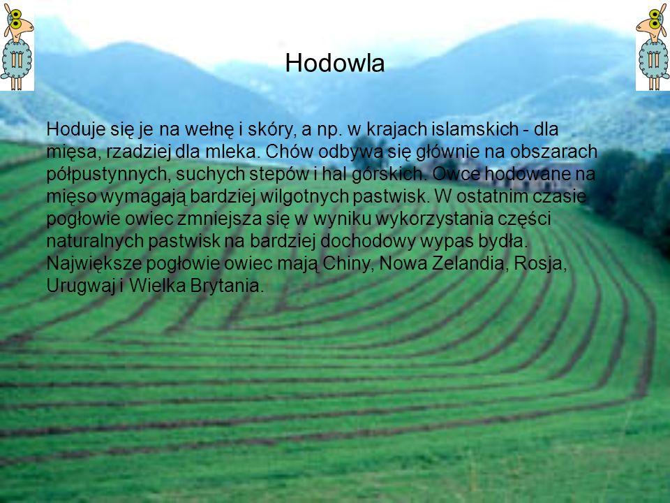 Hodowla