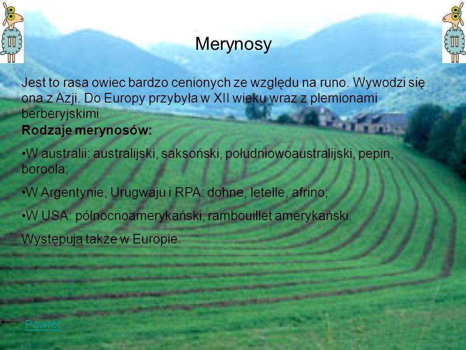 Merynosy