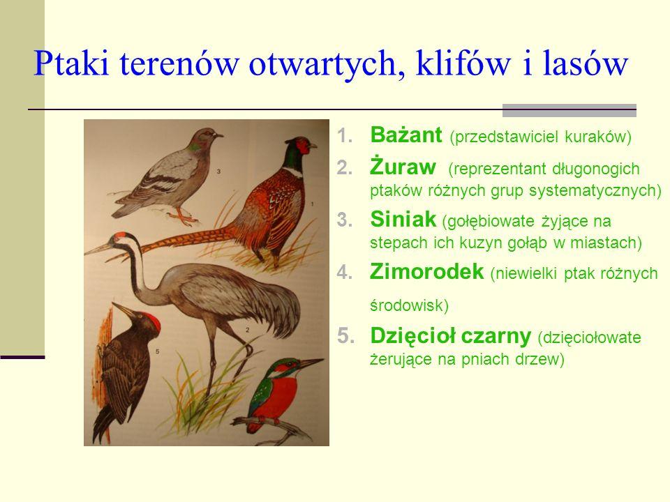 Ptaki terenów otwartych, klifów i lasów