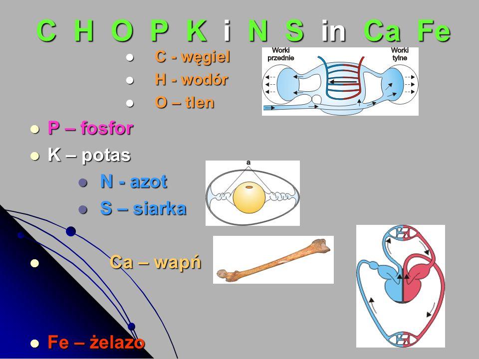 C H O P K i N S in Ca Fe P – fosfor K – potas N - azot S – siarka