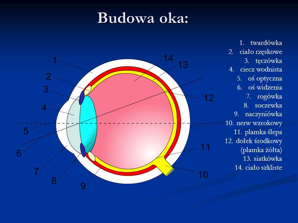 Budowa oka: twardówka ciało rzęskowe tęczówka ciecz wodnista