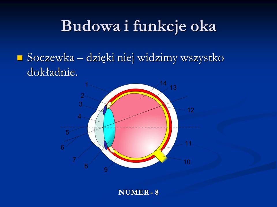 Budowa i funkcje oka Soczewka – dzięki niej widzimy wszystko dokładnie. NUMER - 8