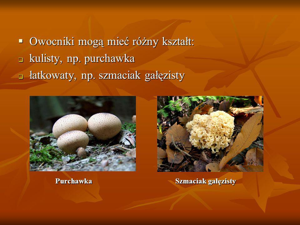 Owocniki mogą mieć różny kształt: kulisty, np. purchawka