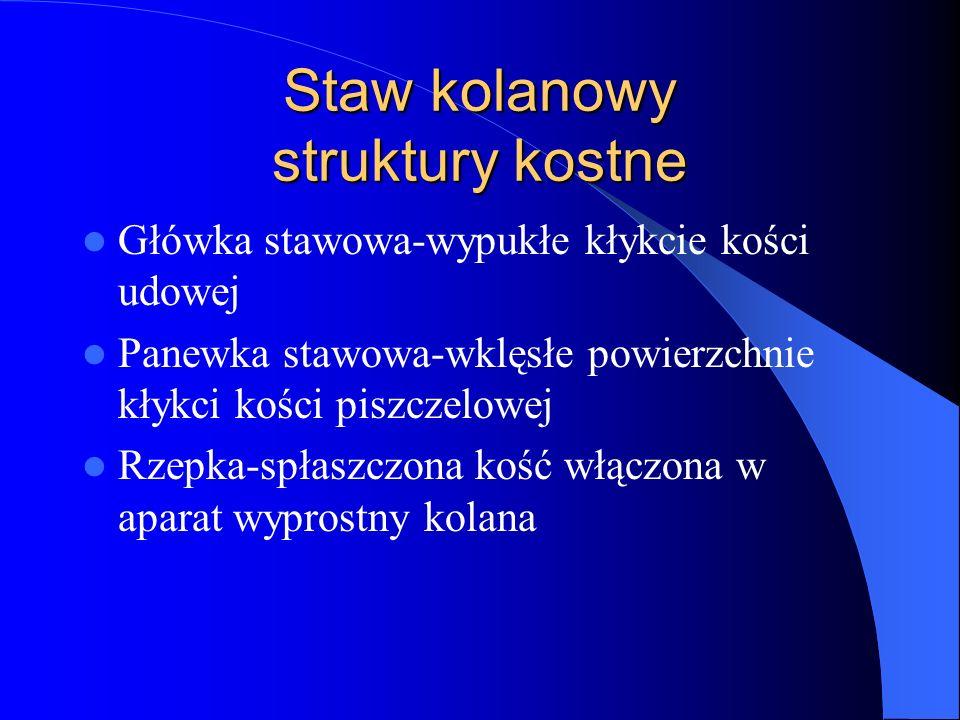 Staw kolanowy struktury kostne