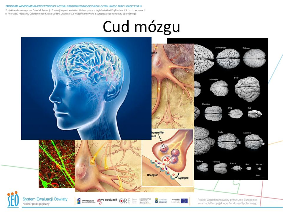 Cud mózgu