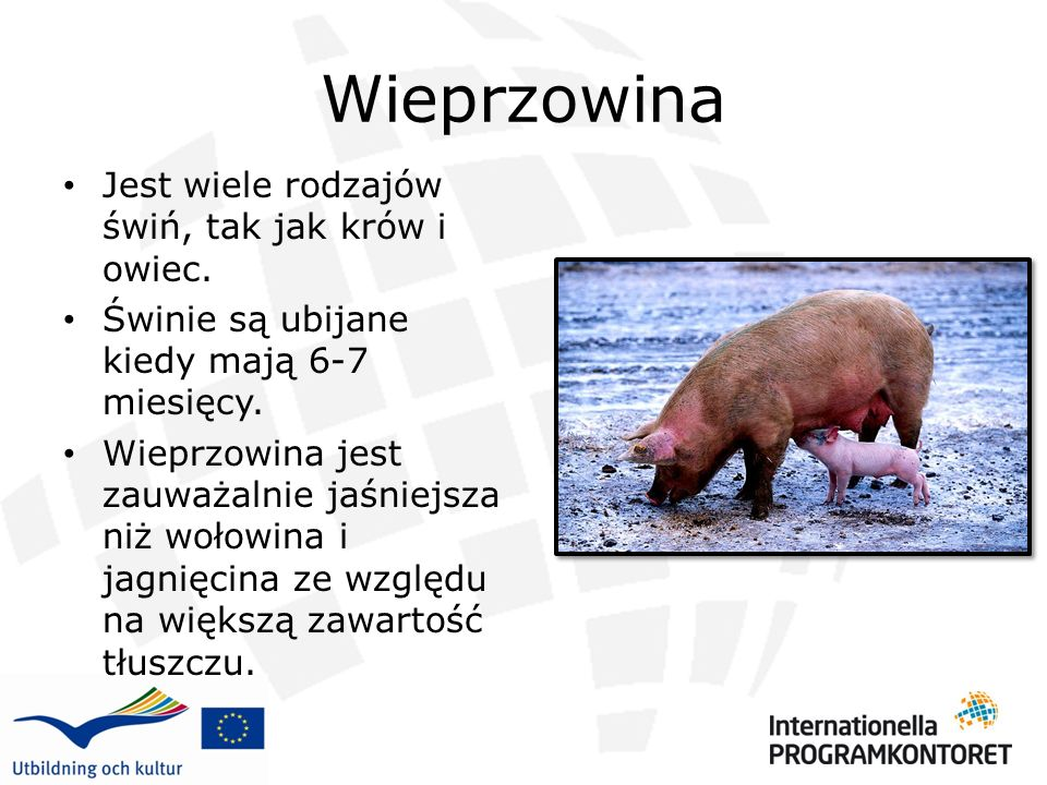 Wieprzowina Jest wiele rodzajów świń, tak jak krów i owiec.
