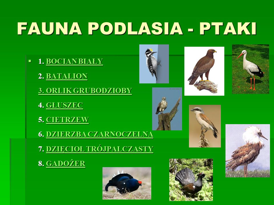 FAUNA PODLASIA - PTAKI