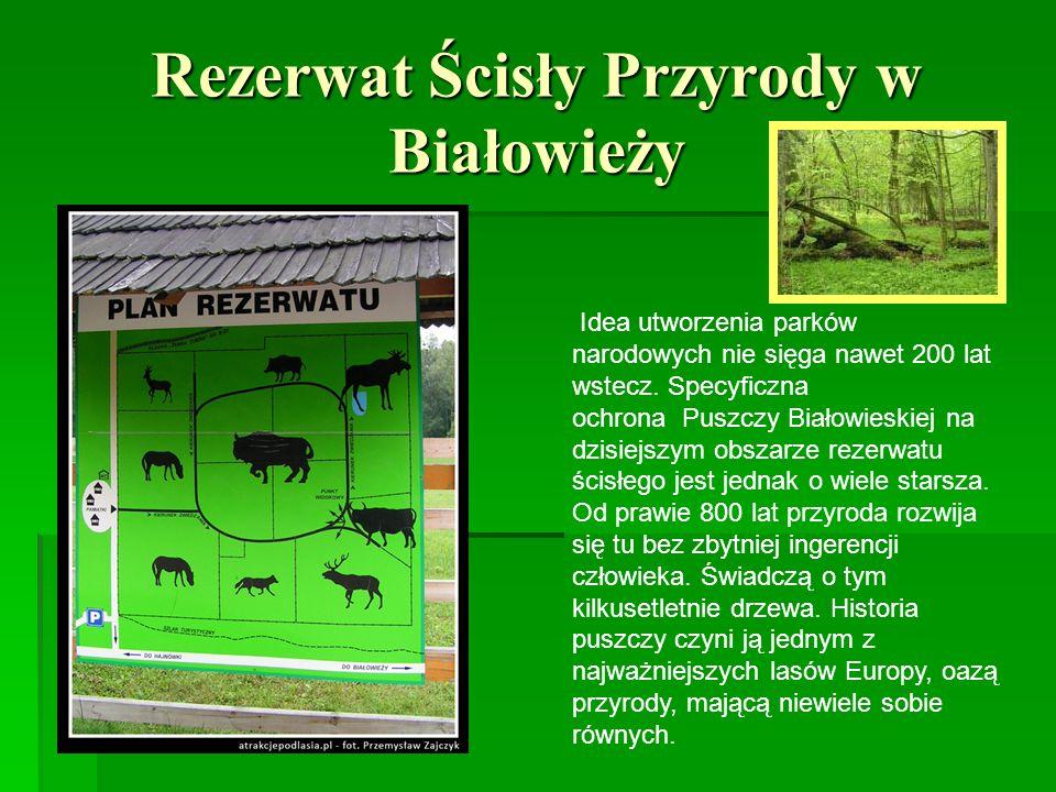 Rezerwat Ścisły Przyrody w Białowieży