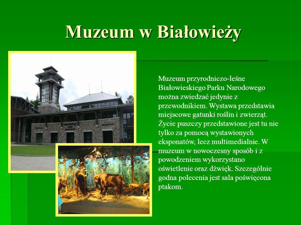 Muzeum w Białowieży
