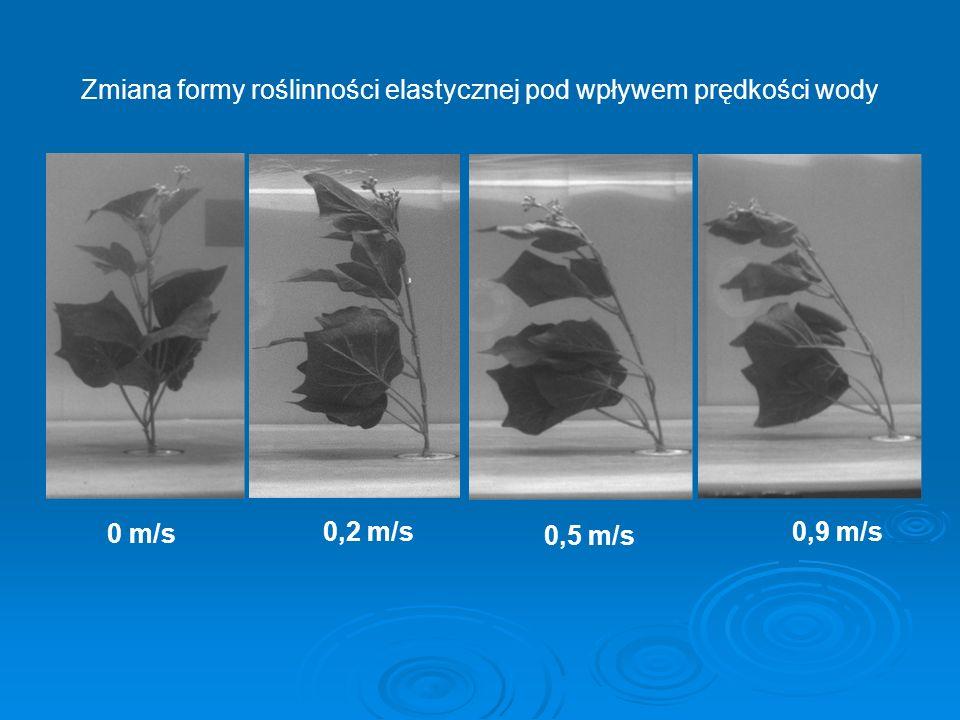 Zmiana formy roślinności elastycznej pod wpływem prędkości wody