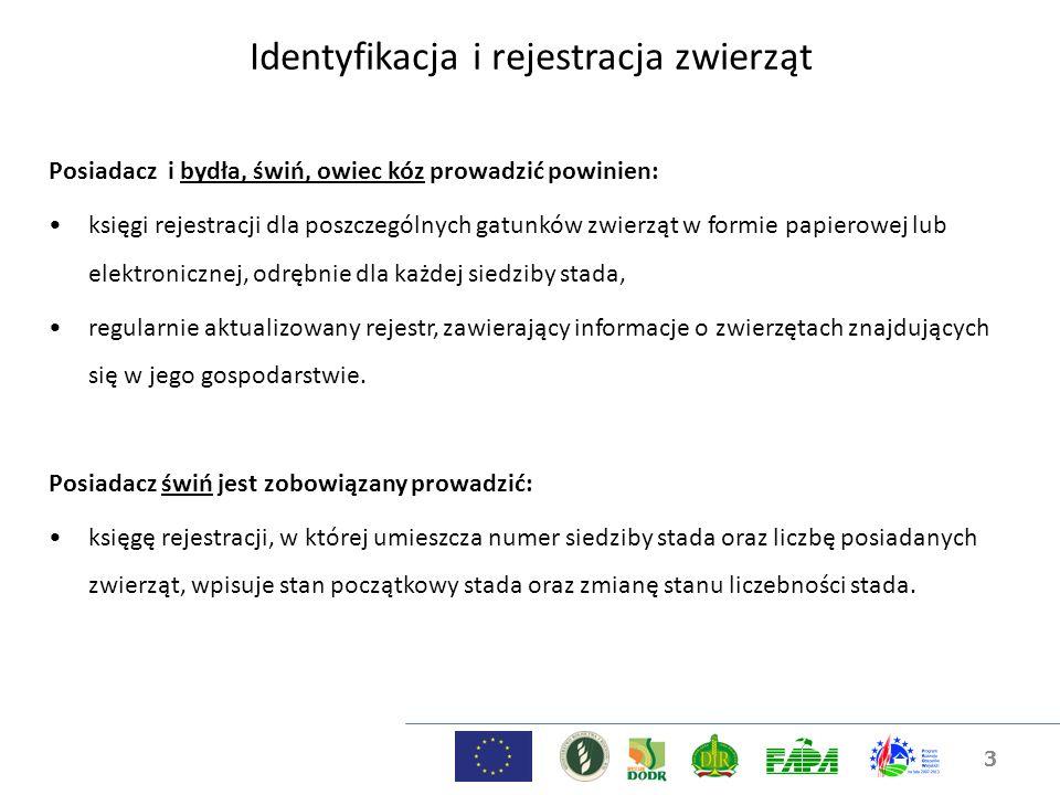 Identyfikacja i rejestracja zwierząt