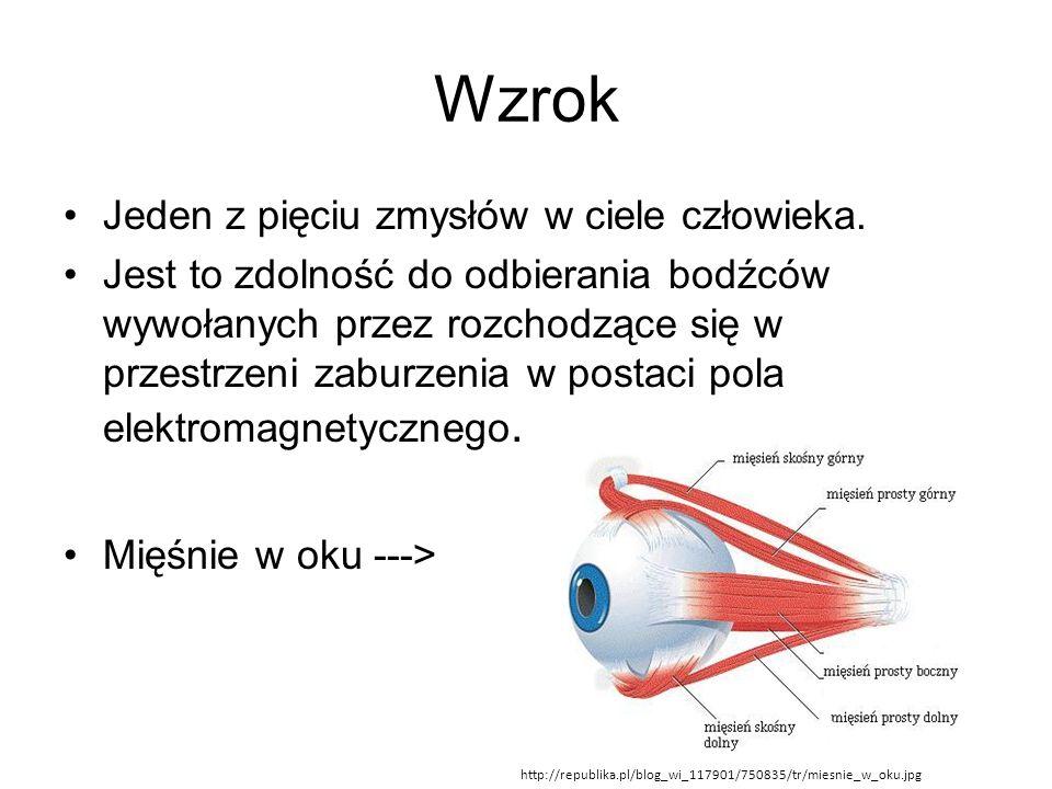 Wzrok Jeden z pięciu zmysłów w ciele człowieka.