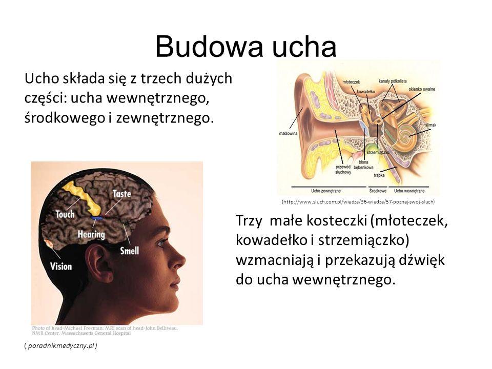 Budowa ucha Ucho składa się z trzech dużych części: ucha wewnętrznego, środkowego i zewnętrznego.