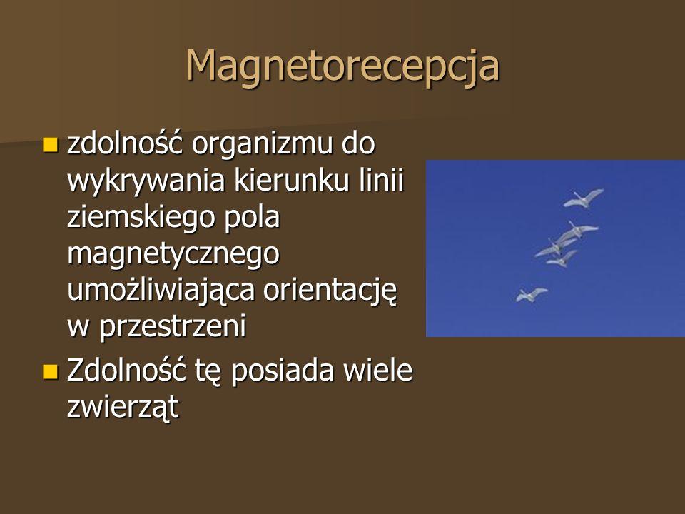 Magnetorecepcja zdolność organizmu do wykrywania kierunku linii ziemskiego pola magnetycznego umożliwiająca orientację w przestrzeni.