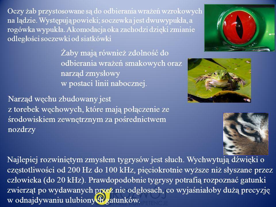 Oczy żab przystosowane są do odbierania wrażeń wzrokowych na lądzie