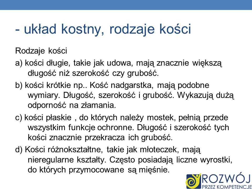 - układ kostny, rodzaje kości