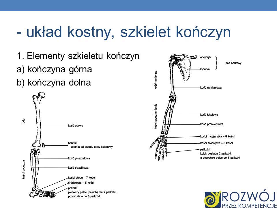 - układ kostny, szkielet kończyn