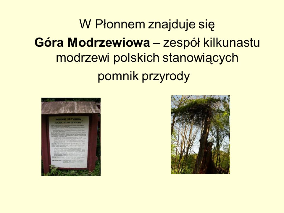 Góra Modrzewiowa – zespół kilkunastu modrzewi polskich stanowiących
