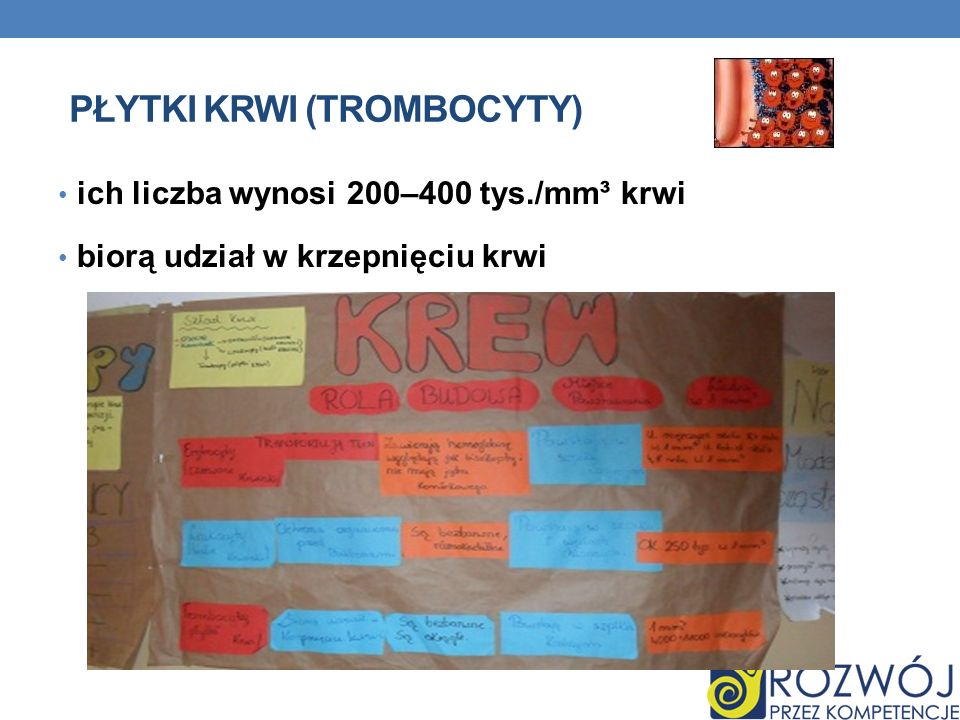 Płytki krwi (trombocyty)