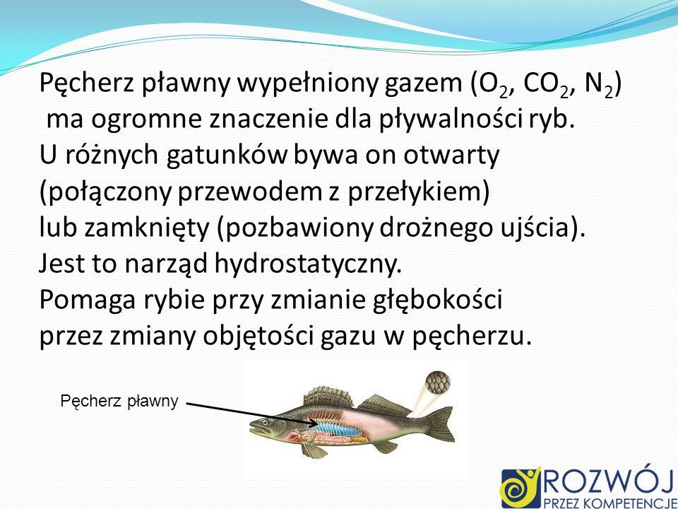 Pęcherz pławny wypełniony gazem (O2, CO2, N2)
