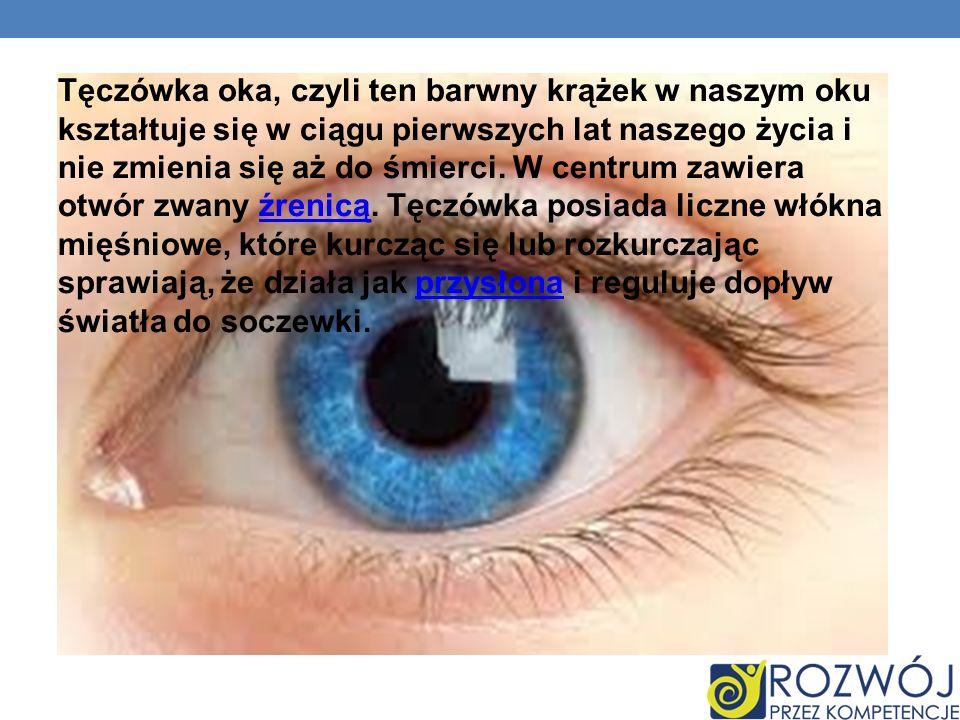 Tęczówka oka, czyli ten barwny krążek w naszym oku kształtuje się w ciągu pierwszych lat naszego życia i nie zmienia się aż do śmierci.
