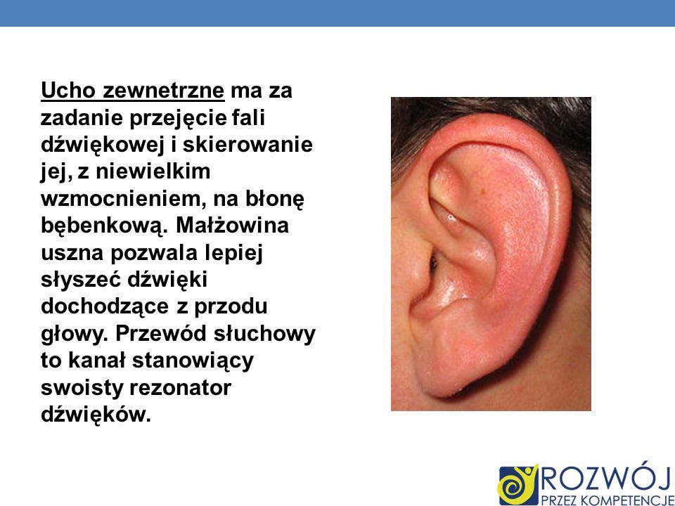 Ucho zewnetrzne ma za zadanie przejęcie fali dźwiękowej i skierowanie jej, z niewielkim wzmocnieniem, na błonę bębenkową.