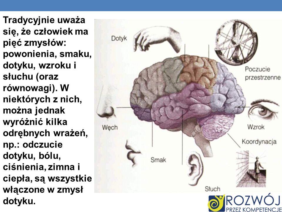Tradycyjnie uważa się, że człowiek ma pięć zmysłów: powonienia, smaku, dotyku, wzroku i słuchu (oraz równowagi).