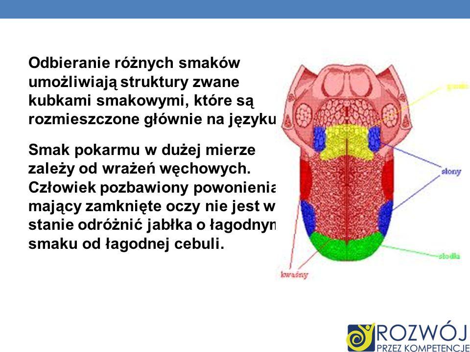 Odbieranie różnych smaków umożliwiają struktury zwane kubkami smakowymi, które są rozmieszczone głównie na języku.