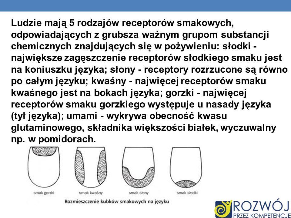 Ludzie mają 5 rodzajów receptorów smakowych, odpowiadających z grubsza ważnym grupom substancji chemicznych znajdujących się w pożywieniu: słodki - największe zagęszczenie receptorów słodkiego smaku jest na koniuszku języka; słony - receptory rozrzucone są równo po całym języku; kwaśny - najwięcej receptorów smaku kwaśnego jest na bokach języka; gorzki - najwięcej receptorów smaku gorzkiego występuje u nasady języka (tył języka); umami - wykrywa obecność kwasu glutaminowego, składnika większości białek, wyczuwalny np.