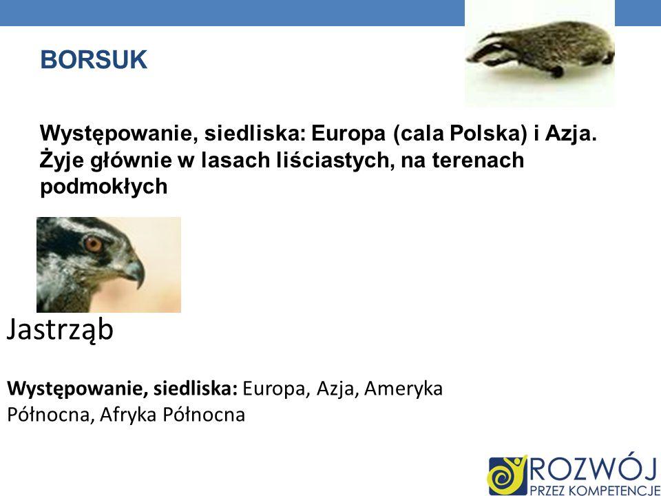 Borsuk Występowanie, siedliska: Europa (cala Polska) i Azja. Żyje głównie w lasach liściastych, na terenach podmokłych.