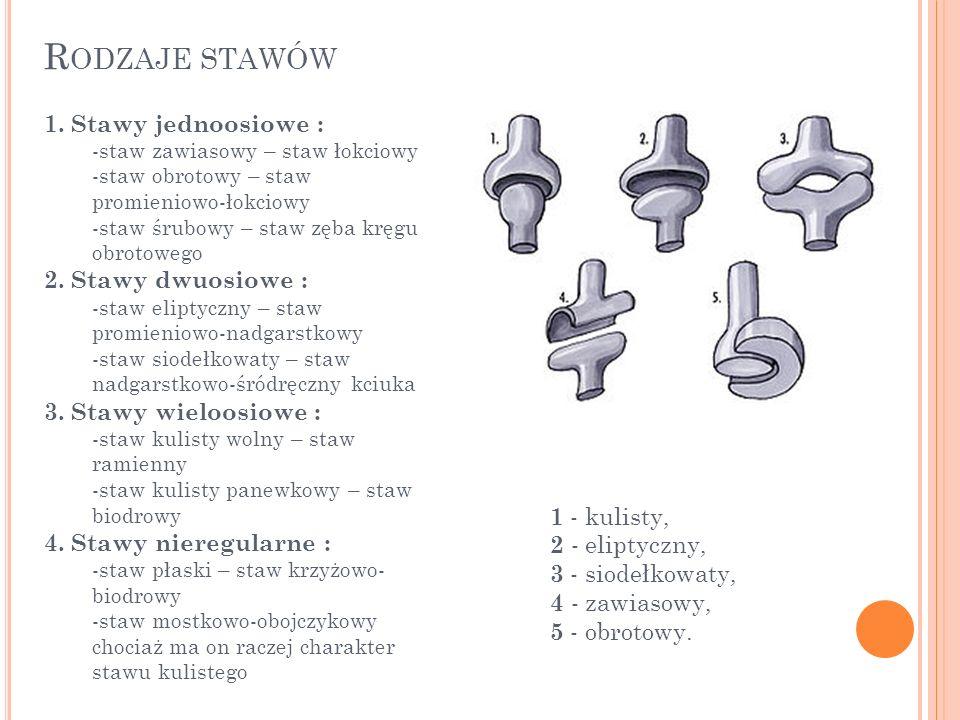 Rodzaje stawów 1. Stawy jednoosiowe : 2. Stawy dwuosiowe :