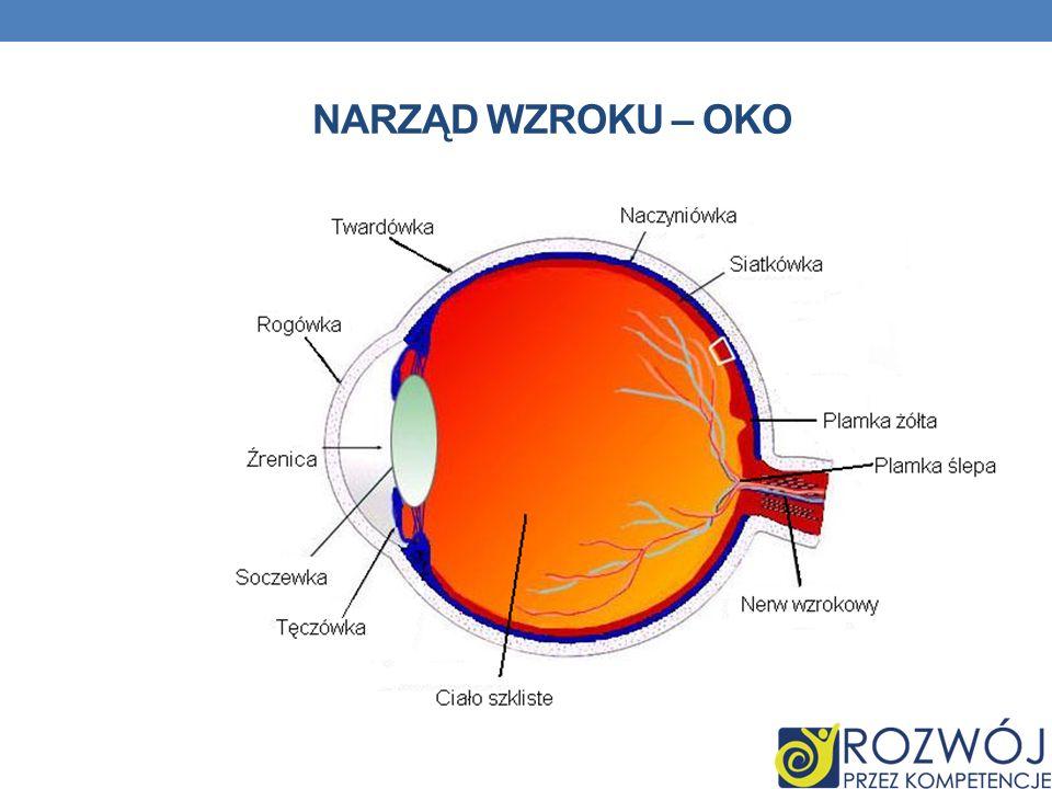 Narząd wzroku – oko