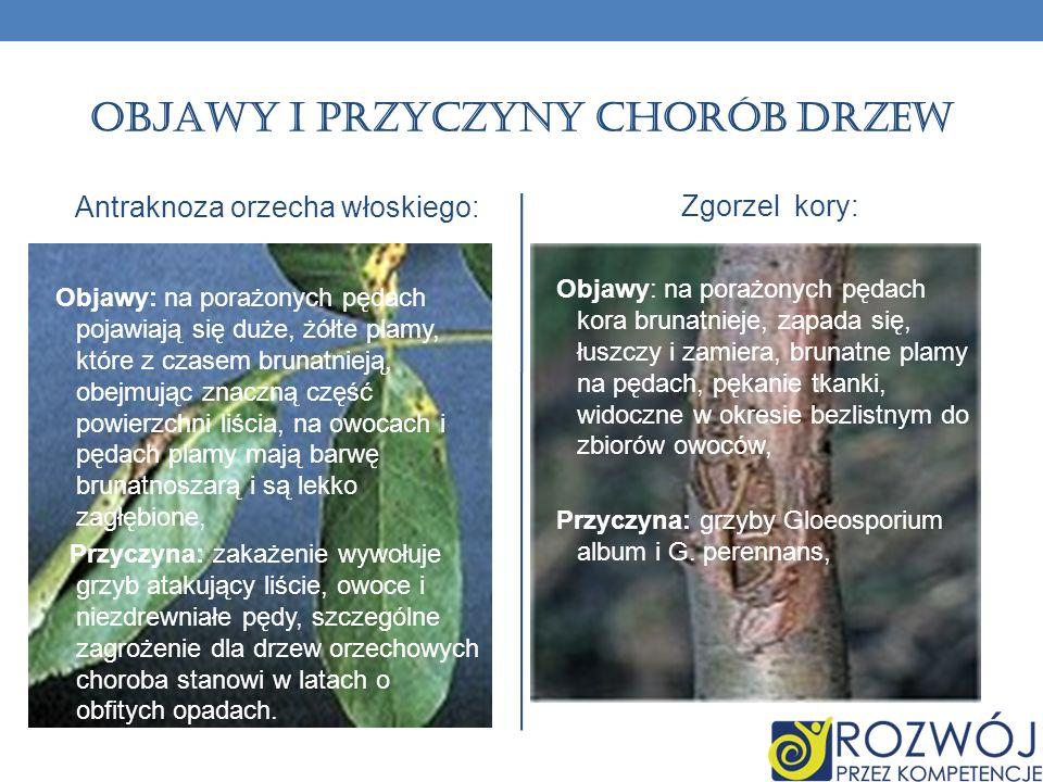 Objawy i przyczyny chorób drzew