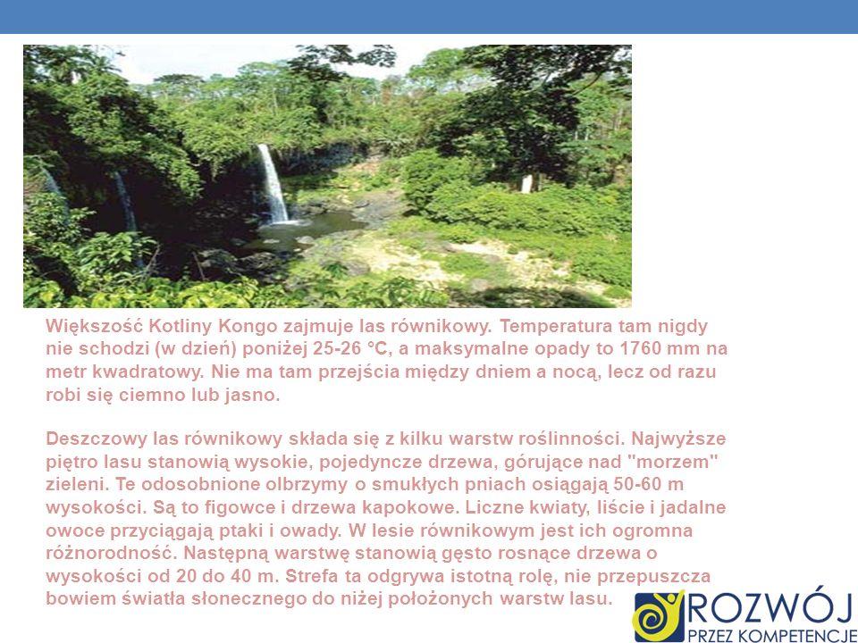 Większość Kotliny Kongo zajmuje las równikowy