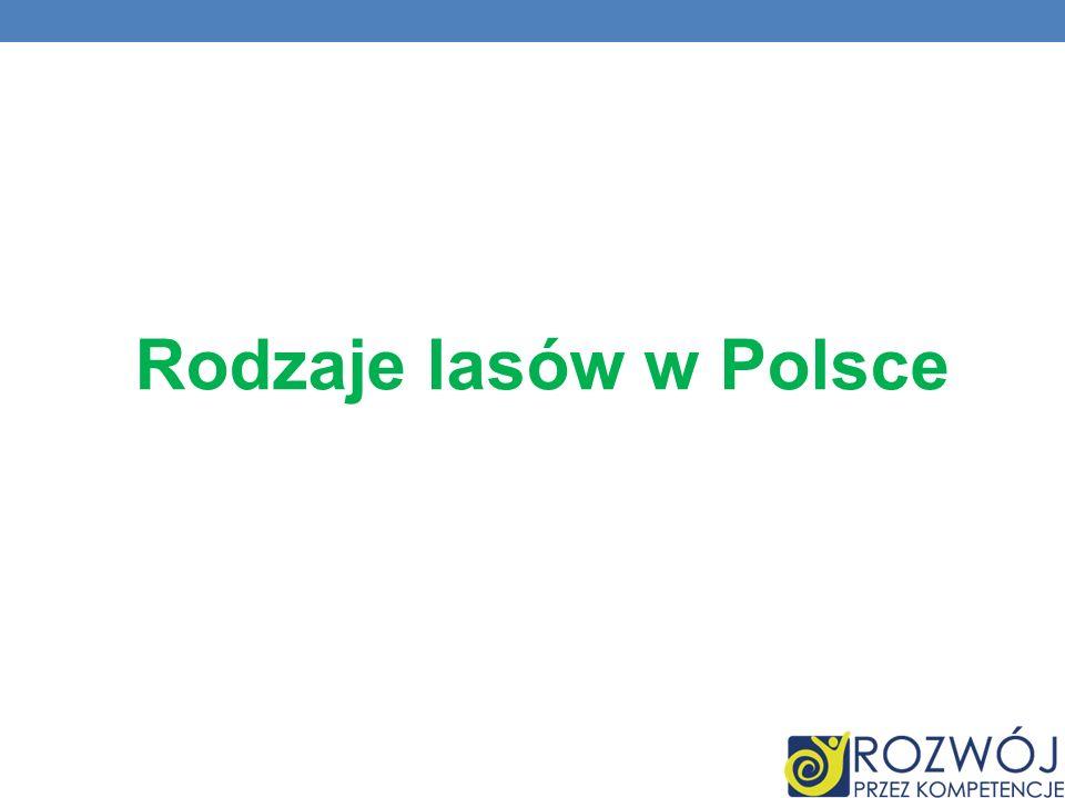 Rodzaje lasów w Polsce
