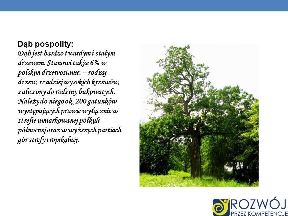 Dąb pospolity: Dąb jest bardzo twardym i stałym drzewem