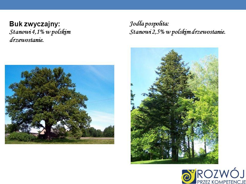 Buk zwyczajny: Stanowi 4,1% w polskim drzewostanie.