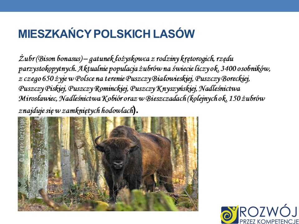 Mieszkańcy polskich lasów
