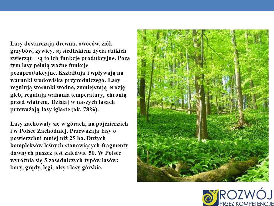 Lasy dostarczają drewna, owoców, ziół, grzybów, żywicy, są siedliskiem życia dzikich zwierząt - są to ich funkcje produkcyjne.