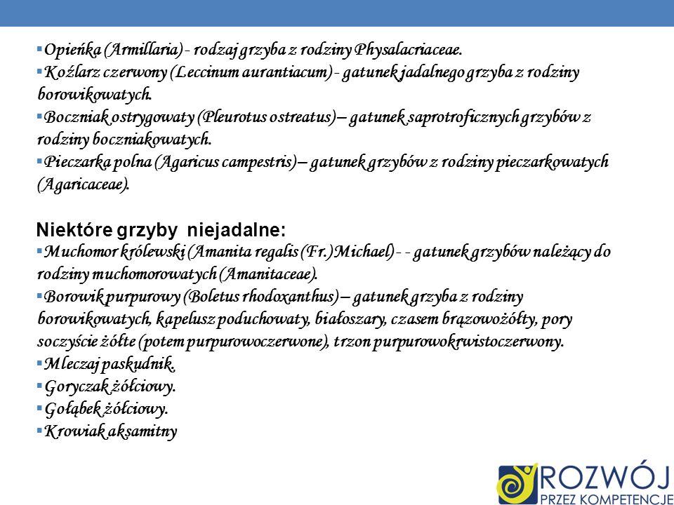 Opieńka (Armillaria) - rodzaj grzyba z rodziny Physalacriaceae.
