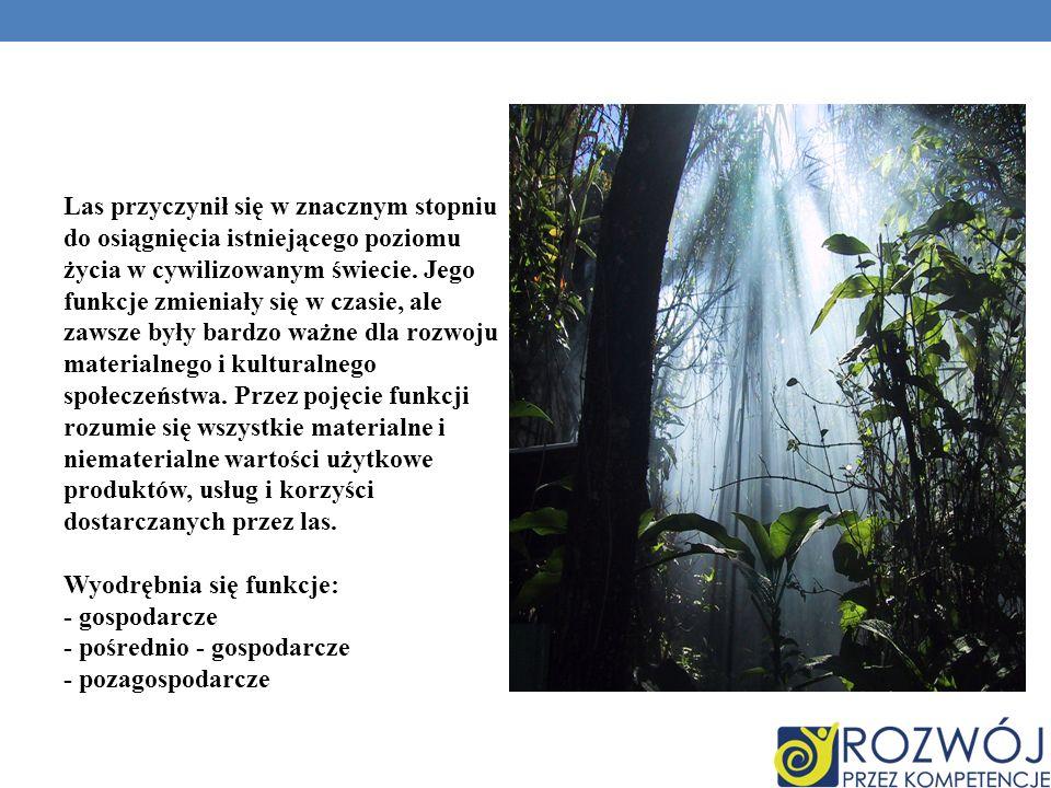 Las przyczynił się w znacznym stopniu do osiągnięcia istniejącego poziomu życia w cywilizowanym świecie.