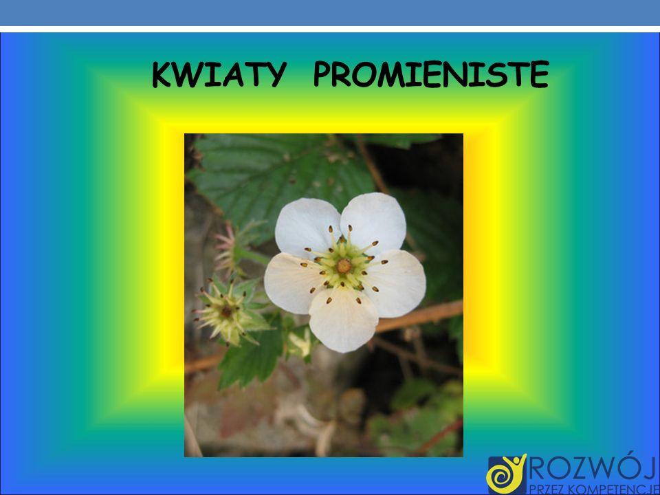 KWIATY PROMIENISTE