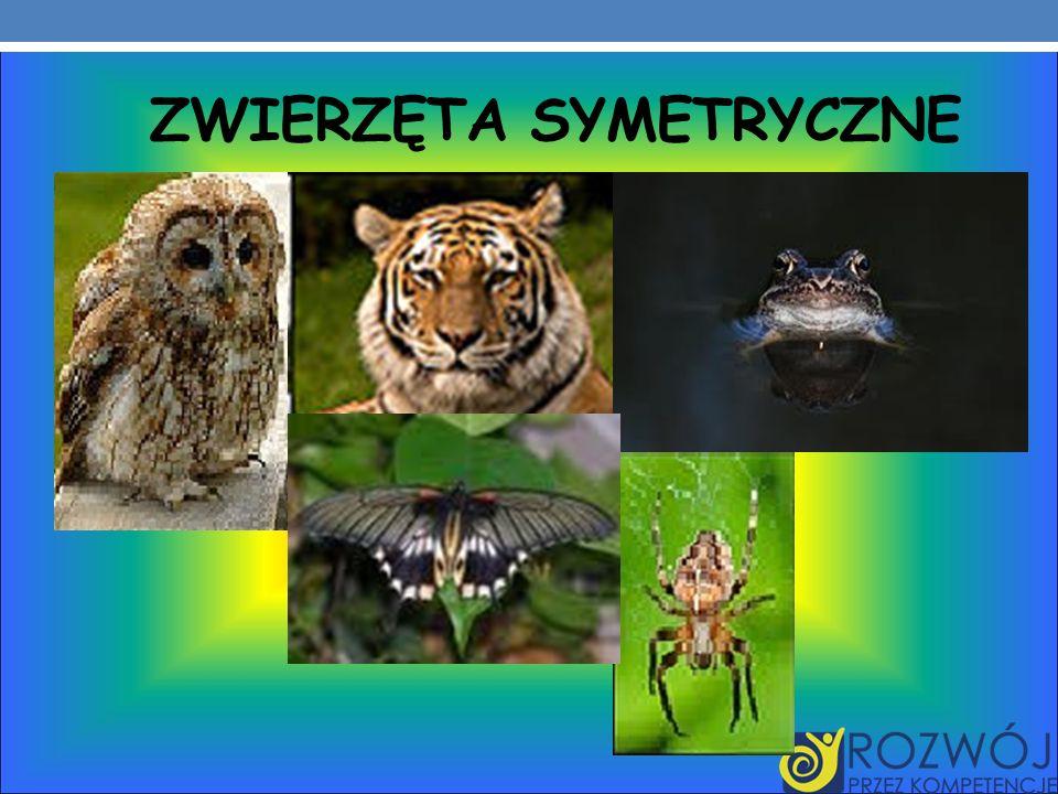 Zwierzęta symetryczne