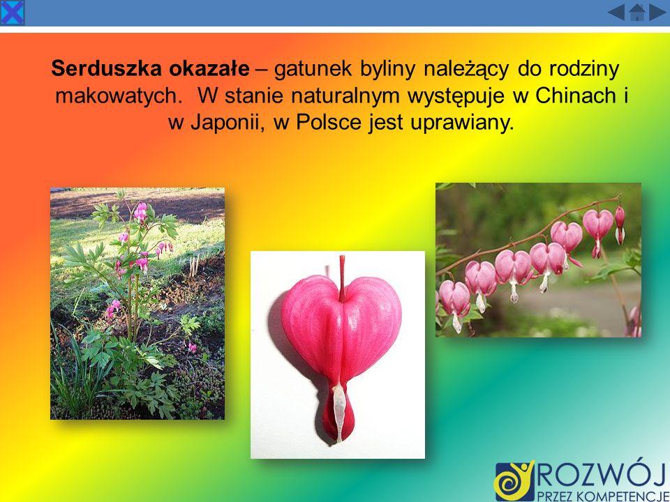 Serduszka okazałe – gatunek byliny należący do rodziny makowatych