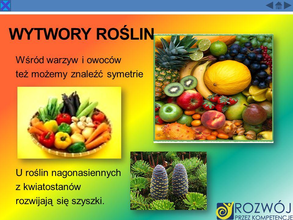 WYTWORY ROŚLIN Wśród warzyw i owoców też możemy znaleźć symetrie