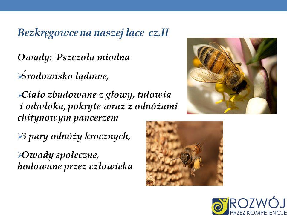 Bezkręgowce na naszej łące cz.II