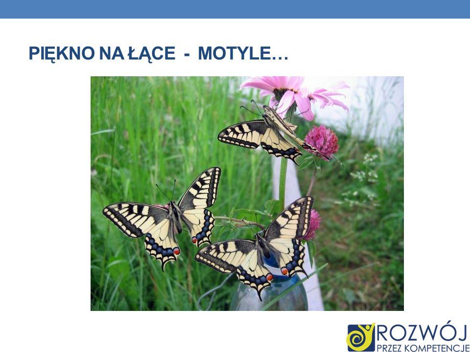 Piękno na łące - motyle…