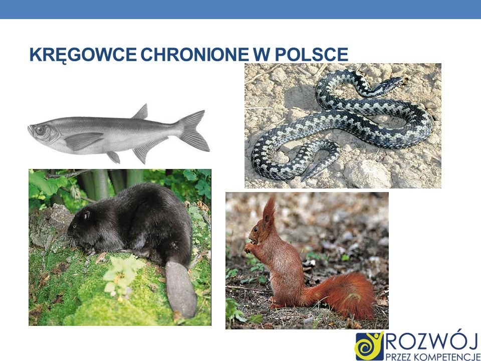 Kręgowce chronione w Polsce
