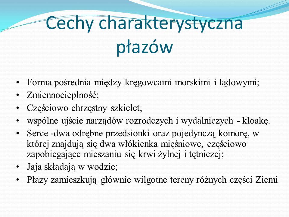 Cechy charakterystyczna płazów