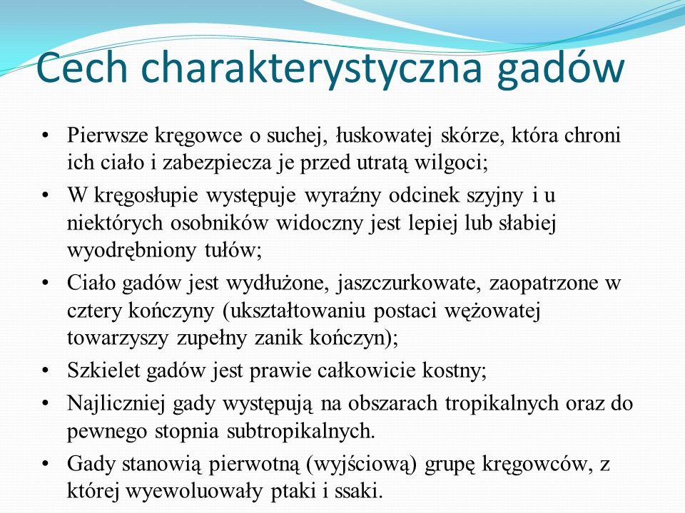 Cech charakterystyczna gadów